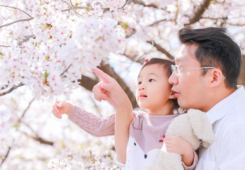 Family Photo location shoot in Nagoya with Sakura in full bloom