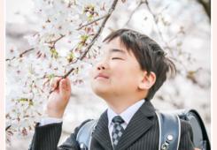 小学校入学記念 1年生の男の子 ランドセルと桜の花